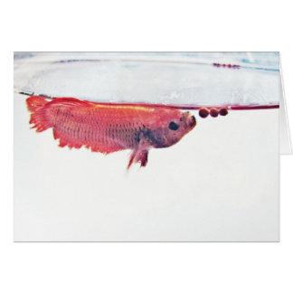 Bocal poissons carte for Poisson betta bocal