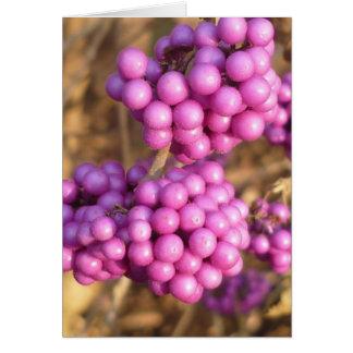 Bodinieri de Callicarpa (rose) - carte de voeux