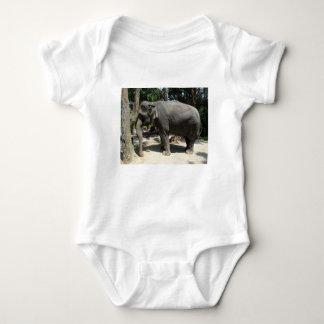 Body Éléphants en Thaïlande
