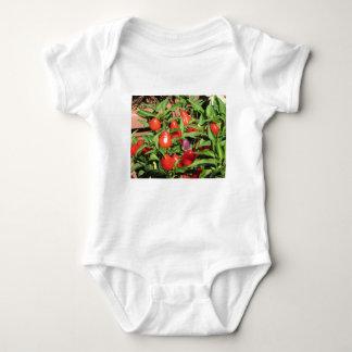 Body Poivrons de piment rouge accrochant sur le plante