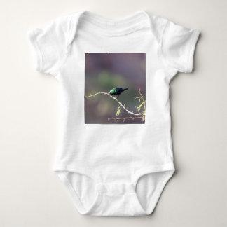 Body Sunbird brillant (habessinicus de Cinnyris)
