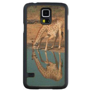 Boire de girafe (Giraffa Camelopardalis) Coque Galaxy S5 En Érable