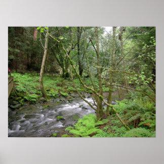 Bois de Muir Affiches