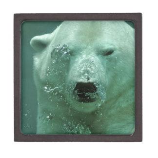 Boîte À Babioles De Première Qualité Ours blanc sous l'eau