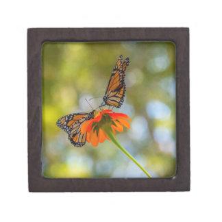 Boîte À Babioles De Première Qualité Papillons de monarque sur des fleurs sauvages