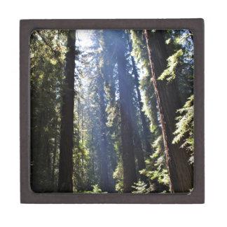 Boîte À Bijoux De Première Qualité Séquoias de Californie