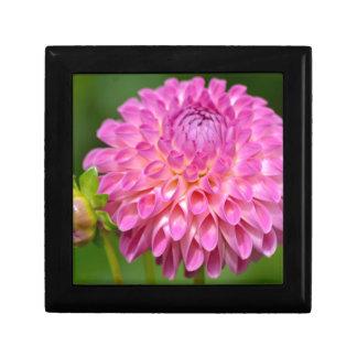 Boîte À Souvenirs Affiche rose abondante de dahlia et de bourgeon