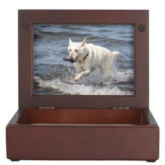 Boîte À Souvenirs Allemand blanc Shepard sur le lac George