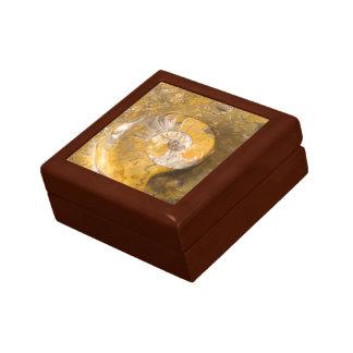 Boîte À Souvenirs Ammonite fossilisée en photo de plan rapproché de