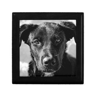 Boîte À Souvenirs Animal familier canin de chien