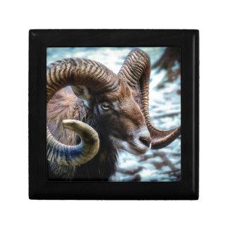 Boîte À Souvenirs Animal mammifère Mouflon du monde animal de nature