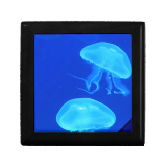Boîte À Souvenirs Aquarium de la Caroline du Nord de méduses
