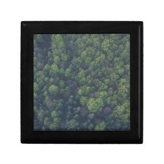 Boîte À Souvenirs Arbres verts