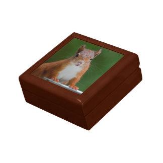 Boîte À Souvenirs Boîte-cadeau assoiffée d'écureuil