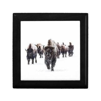 Boîte À Souvenirs Buffalo