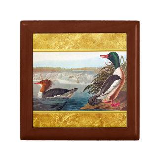 Boîte À Souvenirs Canards américains de canard dans une natation de