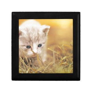 Boîte À Souvenirs Charme mignon d'animal de compagnie de chaton de