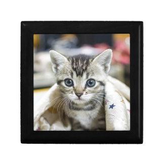 Boîte À Souvenirs chat