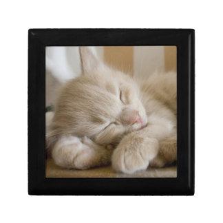 Boîte À Souvenirs Chaton de sommeil