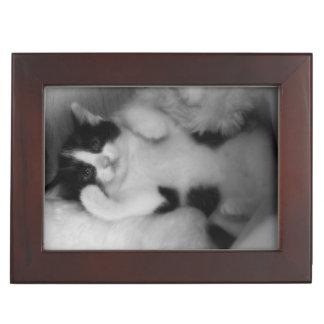 Boîte À Souvenirs Chaton noir et blanc