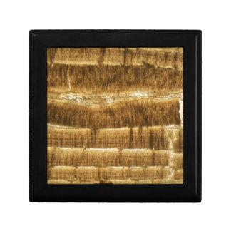 Boîte À Souvenirs Chaux de Nummulite sous le microscope