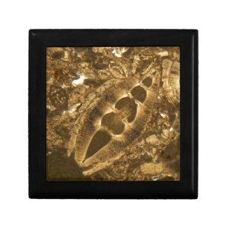 Boîte À Souvenirs Chaux miocène sous le microscope