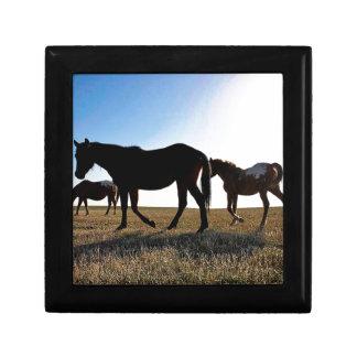 Boîte À Souvenirs Cheval de 3 prairies
