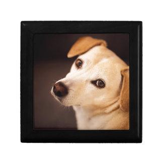 Boîte À Souvenirs chien