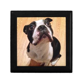 Boîte À Souvenirs Chien de Boston Terrier