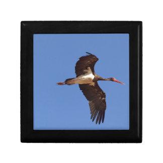 Boîte À Souvenirs Cigogne noire (nigra de Ciconia) en vol