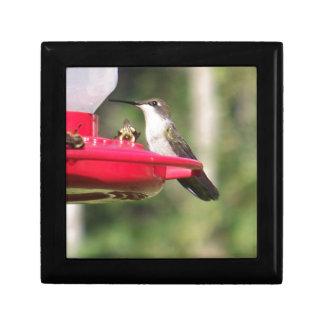 Boîte À Souvenirs Colibri Throated rouge