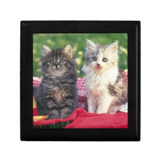 Boîte À Souvenirs Deux chatons se reposant sur une couverture