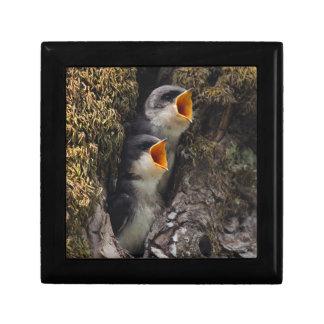 Boîte À Souvenirs Deux hirondelles d'arbre de bébé