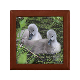 Boîte À Souvenirs Deux jeunes cygnes
