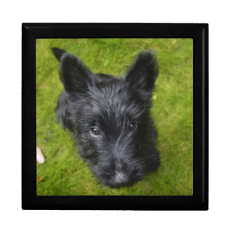 Boîte À Souvenirs Écossais-Terrier-chiot