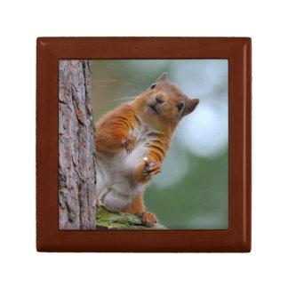 Boîte À Souvenirs Écureuil rouge sauvage dans la photo écossaise de