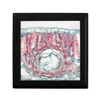 Boîte À Souvenirs Feuille de coton sous le microscope