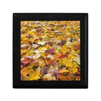 Boîte À Souvenirs Feuille tombé de couleur d'automne sur des parcs