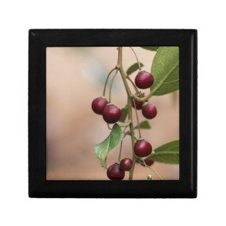 Boîte À Souvenirs Fruits d'un nerprun brillant de feuille