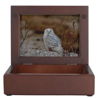 Boîte À Souvenirs Hibou de Milou se reposant sur une roche