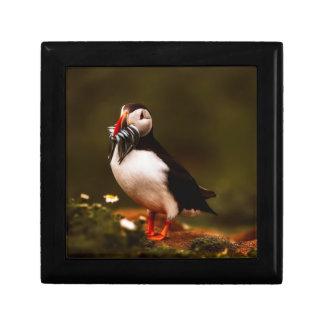Boîte À Souvenirs Île animale d'Océan atlantique de faune d'oiseau