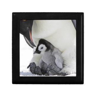 Boîte À Souvenirs Île de colline de neige du pingouin d'empereur |