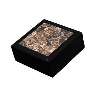 Boîte À Souvenirs Image de fossiles d'agate de Turritella