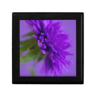 Boîte À Souvenirs Image en gros plan de l'aster de fleur sur le