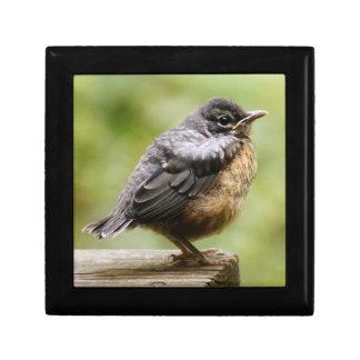 Boîte À Souvenirs Jeune Robin