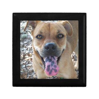 Boîte À Souvenirs langue 804a repérée par chien heureux