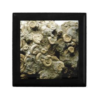 Boîte À Souvenirs le fossile écosse l'art