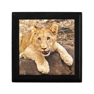 Boîte À Souvenirs Le tigre CUB prend le reniflard sur une roche