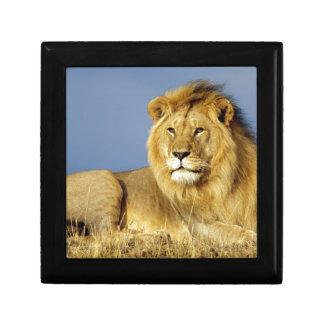 Boîte À Souvenirs Lion
