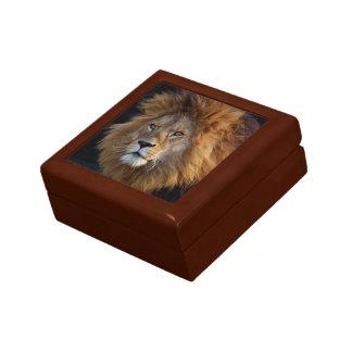 Boîte À Souvenirs Lion prédateur sauvage avec la crinière